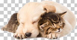 Golden Retriever Labrador Retriever Puppy Kitten Cat PNG