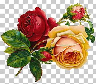 Drawing Rose Flower Art Sketch PNG