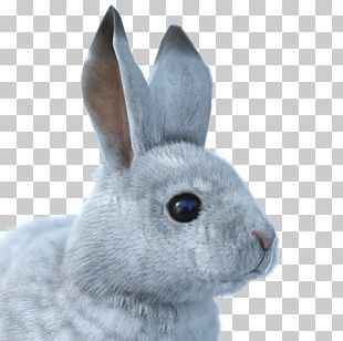The Hunter Snowshoe Hare Arctic Hare Arctic Fox European Rabbit PNG
