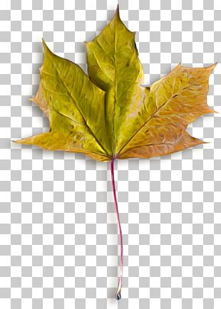 Autumn Leaves Maple Leaf File Formats PNG
