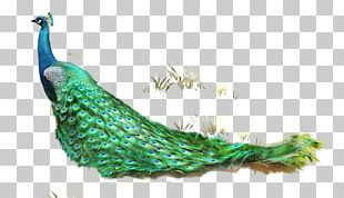 Feather Asiatic Peafowl Computer File PNG