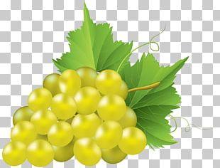 Juice Common Grape Vine Concord Grape PNG