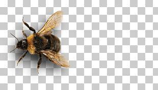 Honey Bee Insect Bumblebee Pollinator PNG