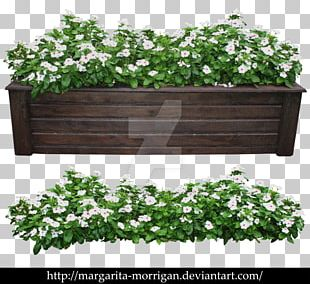Modern Shrub Rose Flowerpot Plant Tree PNG