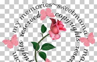 Cut Flowers Floral Design Rose Family PNG