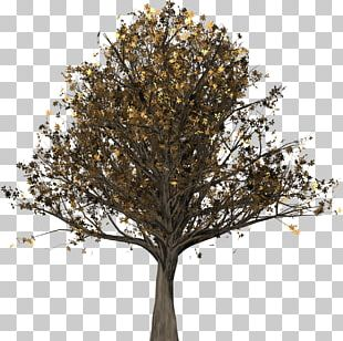 Tree English Oak Northern Red Oak Woody Plant Quercus Suber PNG
