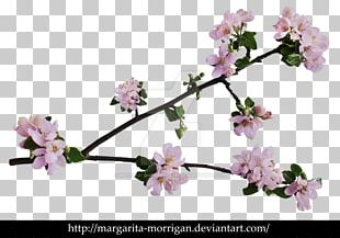 Branch Of Apple Blossoms Cherry Blossom Flower PNG
