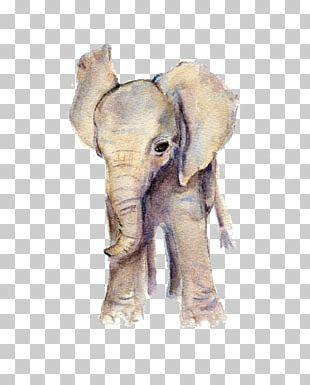 Elephant Watercolor Painting Art Printmaking PNG