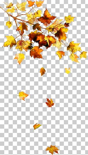 Autumn Leaf Color Autumn Leaf Color Tree Chanson D'automne PNG