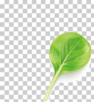 Green Leaf Euclidean PNG
