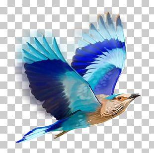 Bird Editing PicsArt Photo Studio PNG