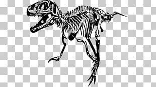 Tyrannosaurus Velociraptor Giganotosaurus Skeleton Dinosaur Size PNG