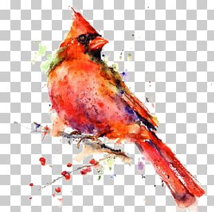 Bird Watercolor Painting Drawing Canvas Print PNG