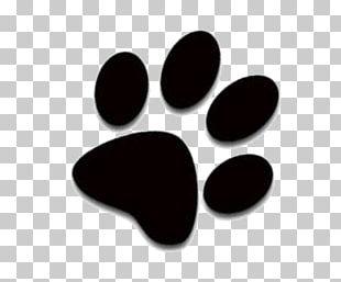 Cat Dog Kitten Paw PNG