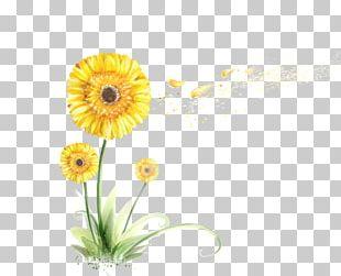 Chrysanthemum Flower Sin PNG