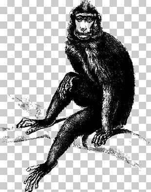 Monkey Gorilla PNG