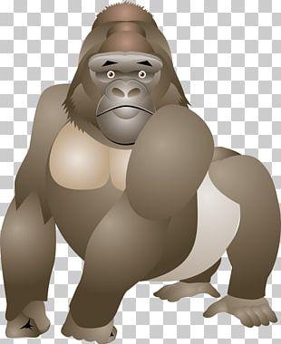 Gorilla Primate Orangutan Monkey Ape PNG