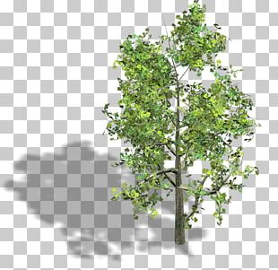 Tree Wood Axonometric Projection Isometric Projection Isometric Graphics In Video Games And Pixel Art PNG