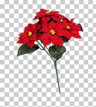 Cut Flowers Herbaceous Plant Annual Plant PNG