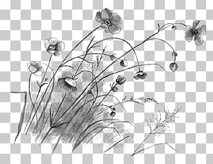 Flower Drawing Floral Design Sketch PNG