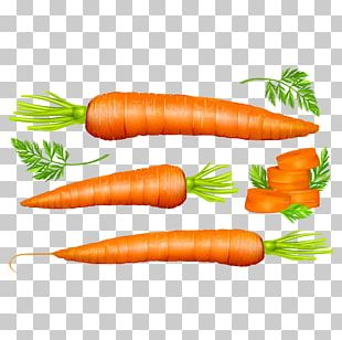 Carrot Vegetable Euclidean PNG