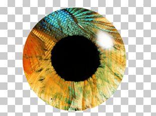 Eye Iris PicsArt Photo Studio Editing PNG