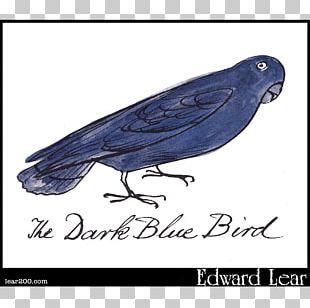 Beak Cobalt Blue Feather PNG