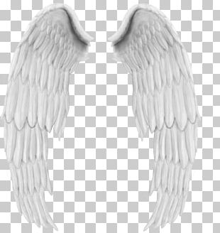 Feather Angel PNG