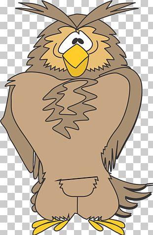 Owl Eagle Hawk Beak PNG