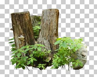 Trunk Tree Wood Cave Advertising PNG