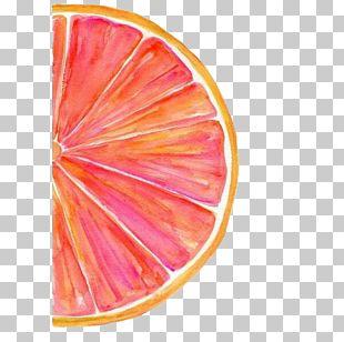 Grapefruit Watercolor Painting Watercolour Tips Art PNG