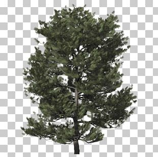 Spruce Christmas Tree Fir Christmas Day PNG