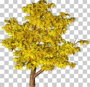 Tree Yellow PNG