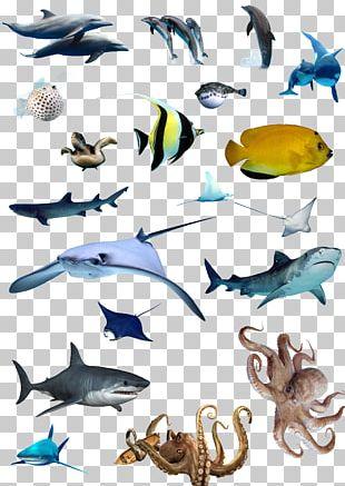 Marine Biology PNG