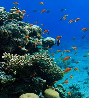 Coral Reef Fish Coral Triangle Ecosystem PNG