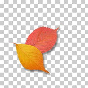 Leaf Petal Google S PNG
