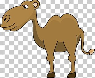 Camel Face PNG