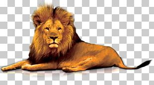 Lions Gate PNG