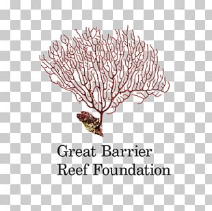 Raine Island Great Barrier Reef Coral Reef Organization PNG