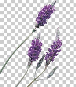 Lavender Oil Perfume PNG