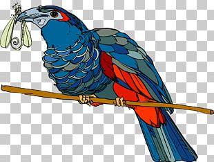 Bird Parrot Beak Feather Macaw PNG