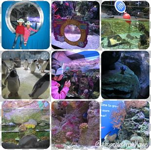 National Sea Life Centre Sea Life Centres Coral Reef Fish Aquarium PNG
