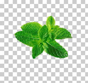 Mentha Spicata Leaf Mentha Canadensis PNG