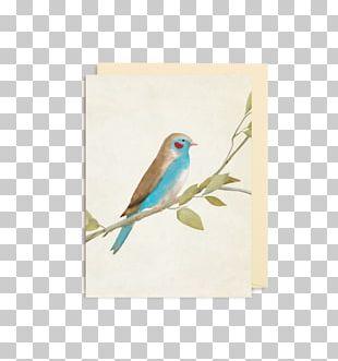 Red-cheeked Cordon-bleu Finches Bird Blue Waxbill Beak PNG