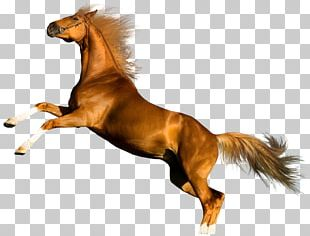 Horse Photography Desktop PNG