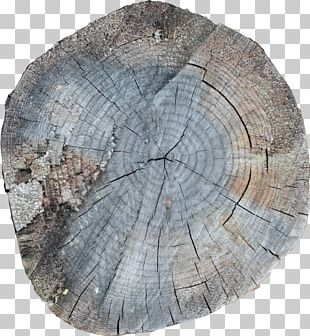 7 January /m/083vt Wood Stock Photography PNG