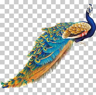 China Bird Peafowl Feather PNG