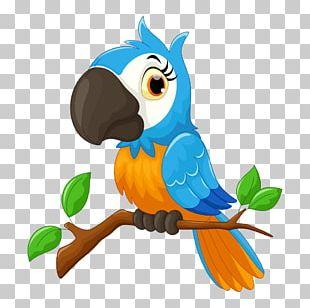 Parrot Cartoon Bird Illustration PNG