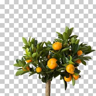 Lemon IKEA Houseplant Common Ivy PNG