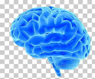 Blue Brain Project Neuroimaging Pink Brain PNG